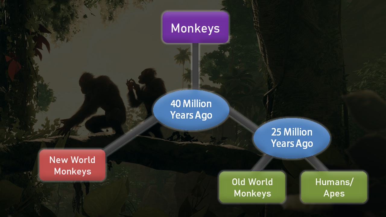 evolution diagram